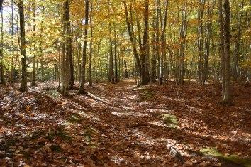 Trail at Sieur De Monts Spring
